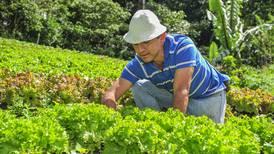 Agricultura orgánica pierde terreno por menor demanda