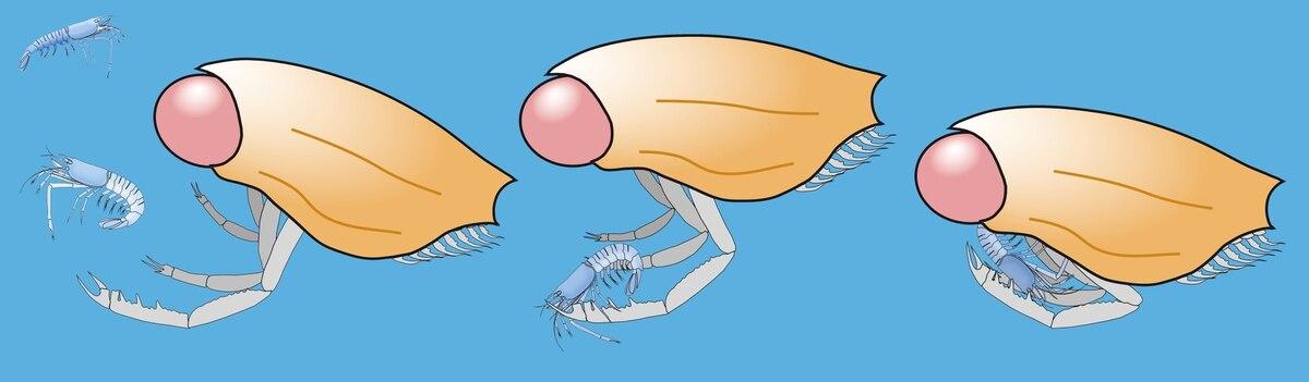 Científicos reconstruyen a crustáceo del período Jurásico