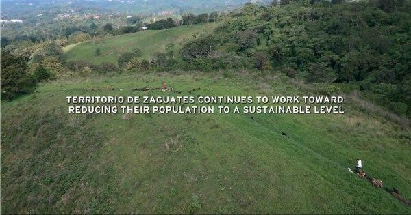 Al concluir el episodio, Territorio de Zaguates seguía tratando de reducir su población canina hasta una cantidad sostenible. Fotografía: Netflix