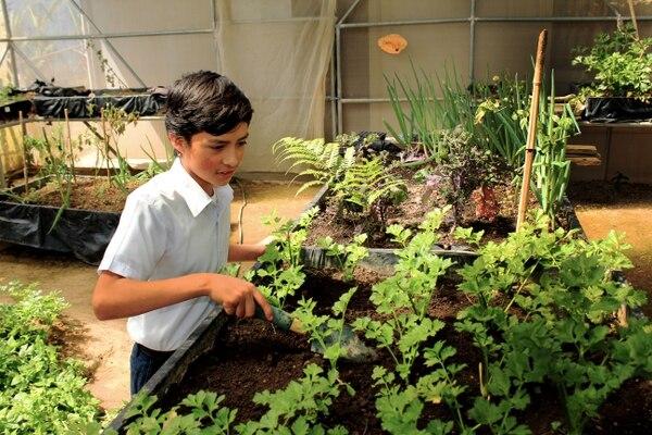 Braiton Aguilar García, de 12 años disfruta cada vez que trabaja en la huerta de su escuela en Frailes de Desamparados. Foto: Felipe Rodríguez, consultor de la FAO.
