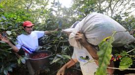 Fuerte alza en precio mundial del café beneficiará a Costa Rica en cosecha 2021-2022