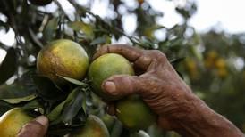 Planes de atracción de mano de obra evitan crisis en recolecciones agrícolas