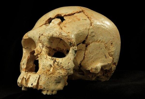 Los restos que se encontraron en España datan de hace 430.000 años y forman parte de la evidencia más antigua de la historia humana. | FOTO: AP