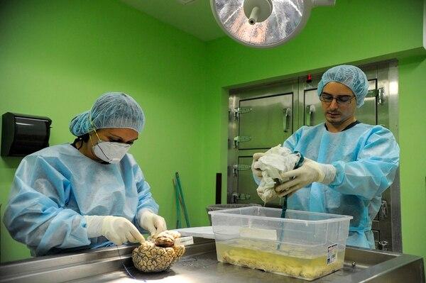 Damaris Guevara, técnica en disección, y el médico forense Lawrence Chacón, realizan un proceso de fijación de un cerebro que extrajeron durante una autopsia en la sala de Patología del Hospital de Liberia. | MAYELA LÓPEZ