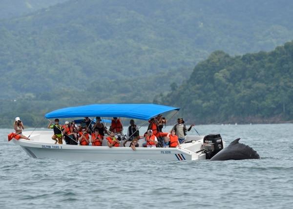 Las comunidades cercanas al Parque Marino Ballena dependen en gran medida de la actividad turística generada por la llegada de ballenas al Pacífico nacional, para realizar sus proceso de reproducción y crianza. Foto: Marvin Caravaca