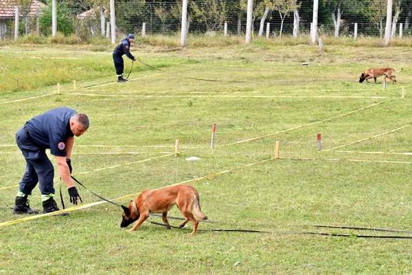 Bosnian civillian protection officers train their Belgian Malinois dog to work in a simulated mine field at training facility near Bosnian town of Konjic, on September 20, 2020. - After Bosnia's 1992-1995 bloody conflict, about eight percent of the country's territory remained infested with mines and other explosive devices. The mine-sniffing dogs have considerably accelerated the mine clearing process after two training centers, funded by Norway and the US, were set up some, 15 years ago. (Photo by ELVIS BARUKCIC / AFP)