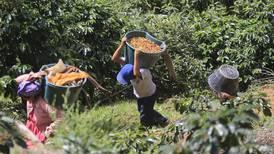 Cosechas estacionales trasladan la presión por mano de obra a zonas norte y sur, Valle Central y Los Santos