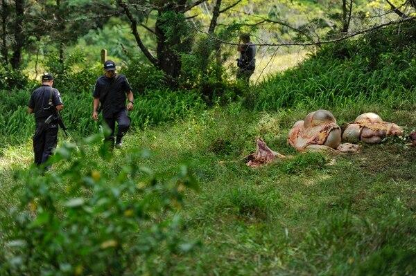 Oficiales de la Unidad de Intervención Policial (UIP) inspeccionaron el sitio donde fueron encontrados los restos de los animales. | LUIS NAVARRO