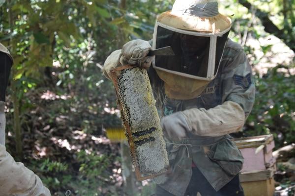 Costa Rica tiene un poco más de 39.000 colmenas, de acuerdo con cifras al 2018. Están distribuidas en todo el país, pero hay más producción en Guanacaste y la Península de Nicoya. Aquí un apiario en la zona de Jicaral. Foto: Rónald Acuña Matarrita de Asoapi.