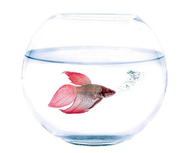 7% de los dueños de mascotas, participantes en este estudio, tienen peces.