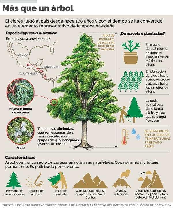 Razones por las cuales elegir un árbol de Navidad natural