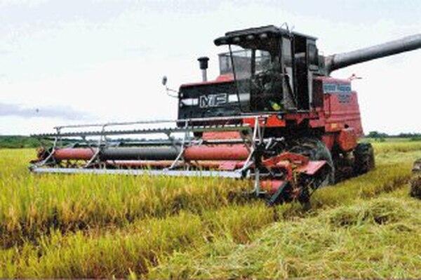 Los productores de arroz apoyaron una propuesta en la cual se eleva el aporte a Conarroz, del 1,5% del valor del saco a un 2,5%, pero compartido con la industria.