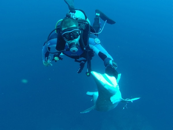 Seis tiburones, entre ellos, una hembra preñada, fueron encontrados muertos por los guardaparques de la Isla del Coco a inicios de octubre. Los escuales estaban adheridos a una línea de pesca abandonada dentro del área marina protegida, cerca del islote Dos Amigos. | JAUME PERICAS PARA LN