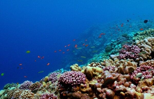 Los científicos investigan, entre otros, corales de Cape Cod, costa ubicada a dos horas de distancia de Woods Hole. Imagen facilitada por el Instituto de Oceanografía de Woods Hole