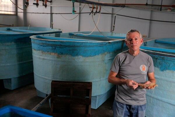 Jorge Alfaro es el encargado del Laboratorio de Cultivo y Fisiología Reproductiva de Crustáceos de la Universidad Nacional (UNA).