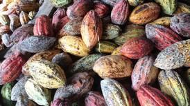 Cacao costarricense brilla en el mundo