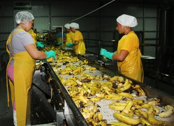 Fruti Light se instaló el año pasado en Siquirres y da empleo a 200 personas de esa localidad. | ALEJANDRO NERDRICK
