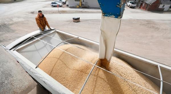 Los productores de soya están entre los más afectados con los aranceles impuestos por China a Estados Unidos, en respuesta a prácticas parecidas de Washington. Terry Morrison en una plantación de soya en Redfield, Iowa. Foto: AP