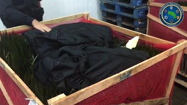 Dentro de cada cajón con plantas se ubicaron los bolsos con la droga. Foto: Ministerio de Seguridad Pública