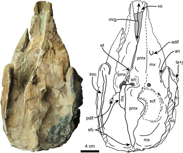 La especie de cachalote, Nanokogia Isthmia, fue identificada a partir de un fósil hallado en Panamá.
