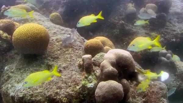 Los arrecifes de coral funcionan como casa cuna de especies marinas de interés comercial y turístico.