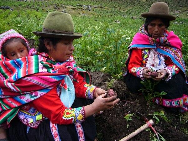 Regina Illamarca y Natividad Pilco, dos de las campesinas que preservan la biodiversidad de la papa en Huama, en el departamento de Cusco, en los Andes peruanos, y cuyos cultivos comienzan a alterarse por el calentamiento planetario.