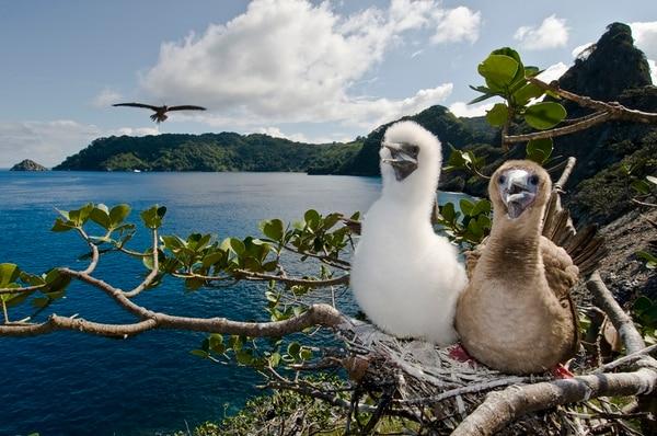 Isla del Coco engalana la ONU