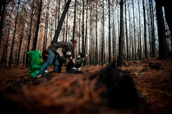 Francisca Torres prepara a una de las border collie para que salga corriendo por el bosque.