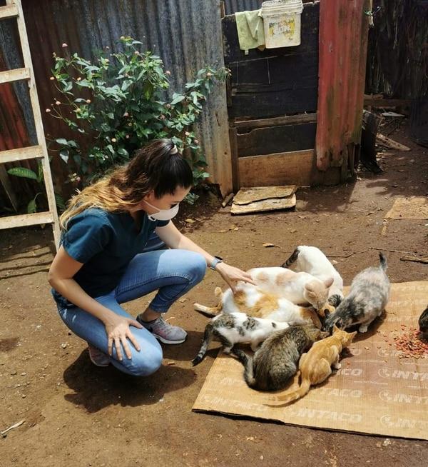 El alimento suministrado para perros y gatos equivale, en peso, a cuatro vehículos livianos. Foto: HSI-LA para LN.