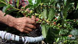Café de Costa Rica recibe &#36;10,7 millones para reducir emisiones de CO  <b>2</b>