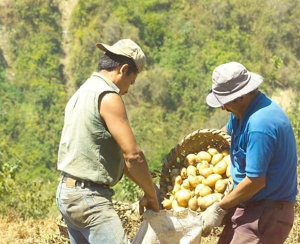 El kilo de papa le cuesta ¢50 menos para ubicarse en ¢800, según los precios sugeridos por el Consejo Nacional de Producción (CNP). | ARCHIVO