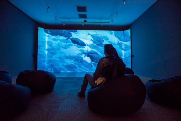 Sobrevolar la isla o sumergirse en sus aguas son dos de las posibilidades que ofrece este espacio de proyección audiovisual. Fotos: Eyleen Vargas.