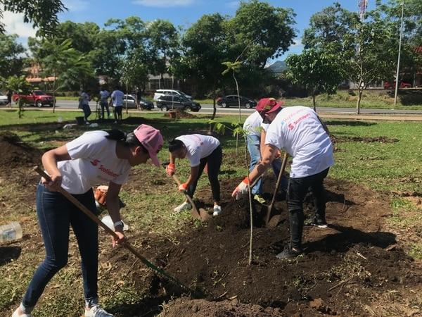 Voluntarios participaron el sábado 4 de agosto en la segunda jornada de siembra del 2018 del Proyecto de Rearborización del Parque Metropolitano La Sabana. Cortesía de Proyecto de Rearborización del Parque Metropolitano La Sabana.