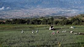 Líderes agrícolas de 34 países abordan en Costa Rica debate entre producción y sostenibilidad