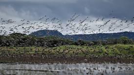 Juzgado despeja vía a proyecto para darle agua a Guanacaste por 50 años
