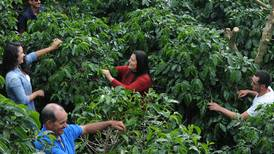 Café de Los Santos gana los tres primeros lugares en concurso para elegir el mejor grano de Costa Rica