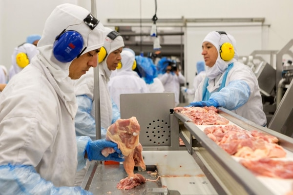 carne contaminada