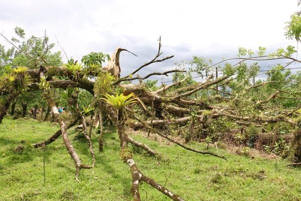El accidente ocurrió unos 500 metros al oeste del centro turístico Manú.
