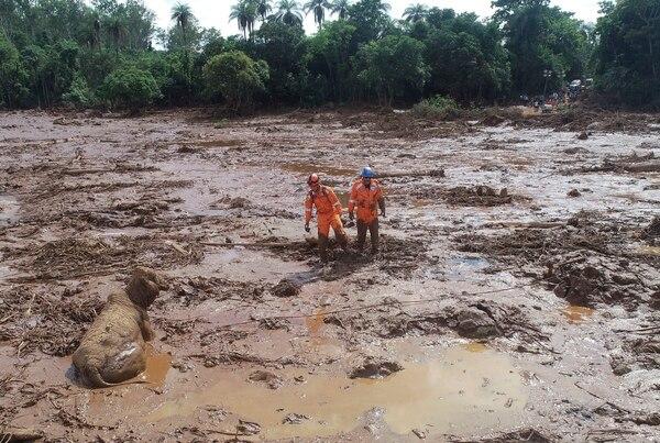 Socorristas intentaban rescatar una vaca en medio del barro, dos días después de la ruptura de una represa en Brumadinho, Brasil, el 27 de enero del 2019.