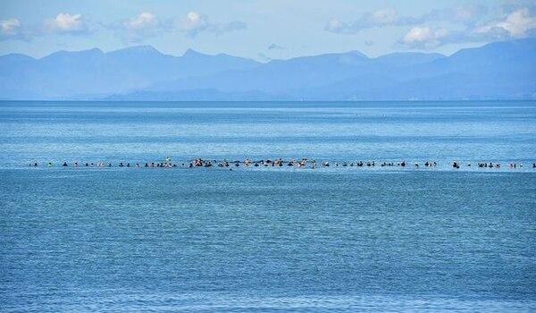 Unos 150 voluntarios ignoraron una alerta por tiburones para formar una cadena humana en el mar e impedir que las ballenas supervivientes regresaran a la playa.