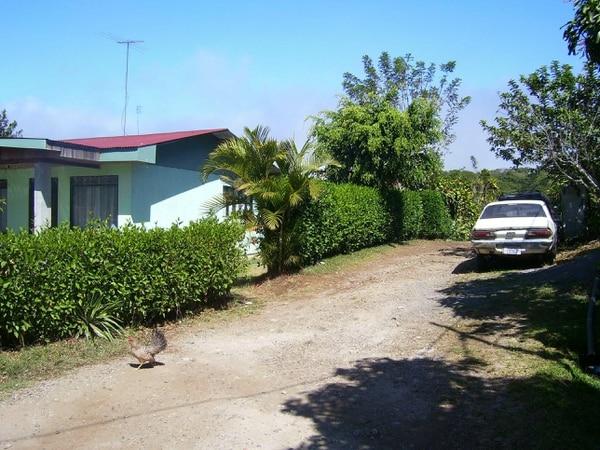 La apacible comunidad de San Roque de Naranjo, Alajuela, vio alterada su tranquilidad con el hallazgo del cuerpo en una finca.