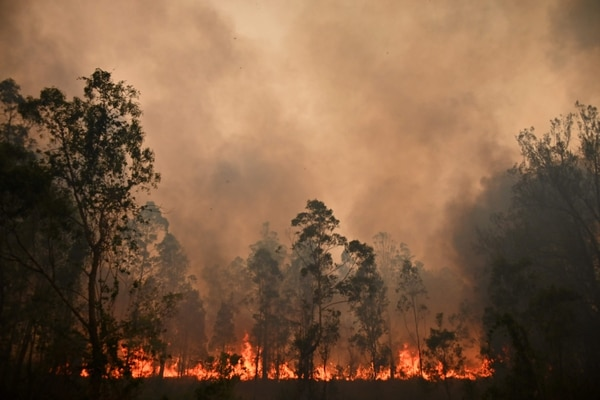 TOPSHOT - A fire rages in Bobin, 350km north of Sydney on November 9, 2019, as firefighters try to contain dozens of out-of-control blazes that are raging in the state of New South Wales. - Catastrophic bushfires in eastern Australia have killed at least three people and forced thousands from their homes, with the death toll expected to rise as firefighters struggle towards hard-to-reach communities. (Photo by PETER PARKS / AFP)