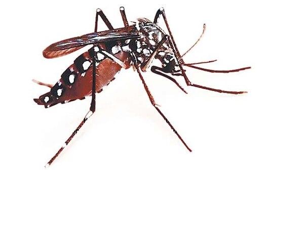 Estamos en la época más lluviosa del año y se lucha para que no proliferen los criaderos del mosquito transmisor.
