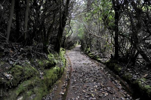 Los senderos, como este que lleva a la laguna Botos, seguirán cerrados, pues se pretende que los turistas estén en un lugar de fácil evacuación. Foto: Melissa Fernández