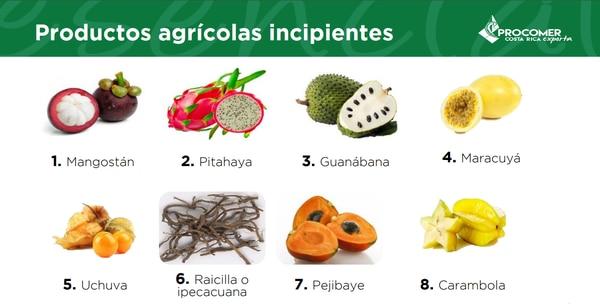 Estos son los ocho cultivos que, según Procomer, tienen mayor potencial para ser exportados a mercados internacionales. Foto: Informe de Procomer.