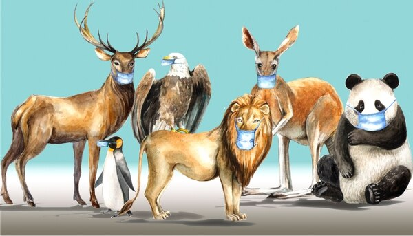 Watercolor horizontal banner with animals from different parts of the earth in face masks and a sign. Self protection, neighbour help concept. Seasonal health care image.