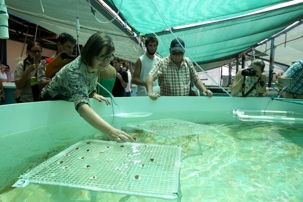 'Jardín de corales' fuera del mar pretende disminuir deterioro de arrecifes en Costa Rica.