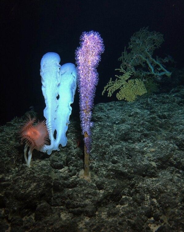 Ante la total oscuridad de lo más profundo del mar, lo único visible eran criaturas luminosas que pasaban al lado del submarino.