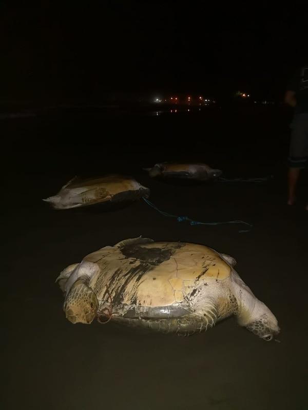 El primer descubrimiento se hizo en la playa, durante un patrullaje en horas de la noche. Foto: Ministerio de Seguridad Pública.