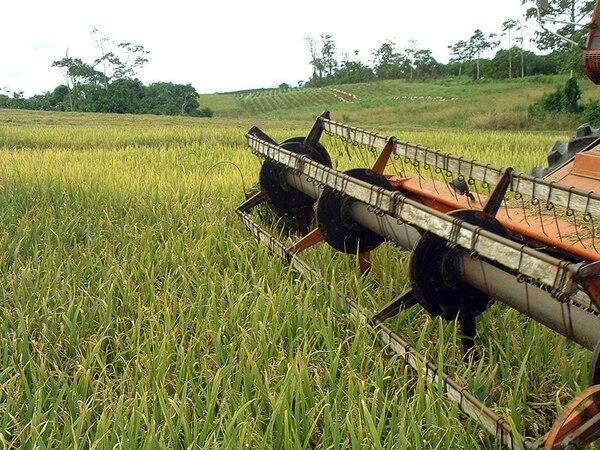 El Instituto Nacional de Seguros (INS) aseguró que no cambiará las condiciones de los seguros para arroz, pues la situación anterior era absolutamente perjudicial para la entidad.